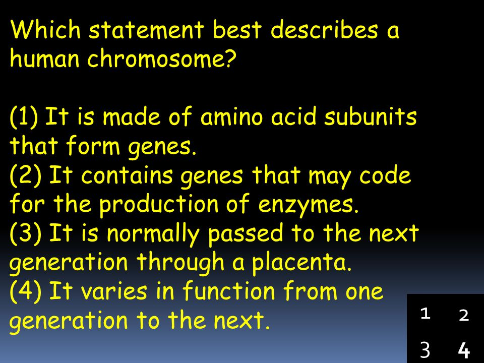 Which statement best describes a human chromosome