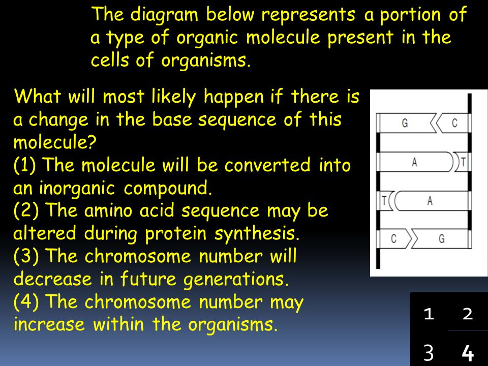 The diagram below represents a portion of a type of organic molecule present in the cells of organisms.
