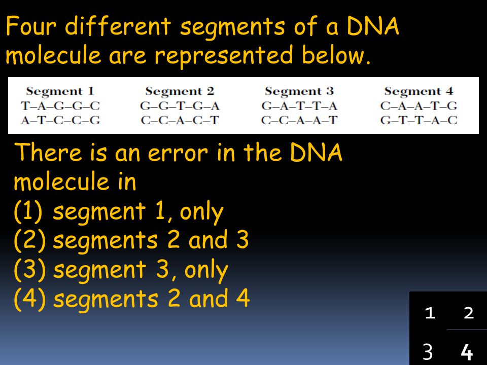 Four different segments of a DNA molecule are represented below.
