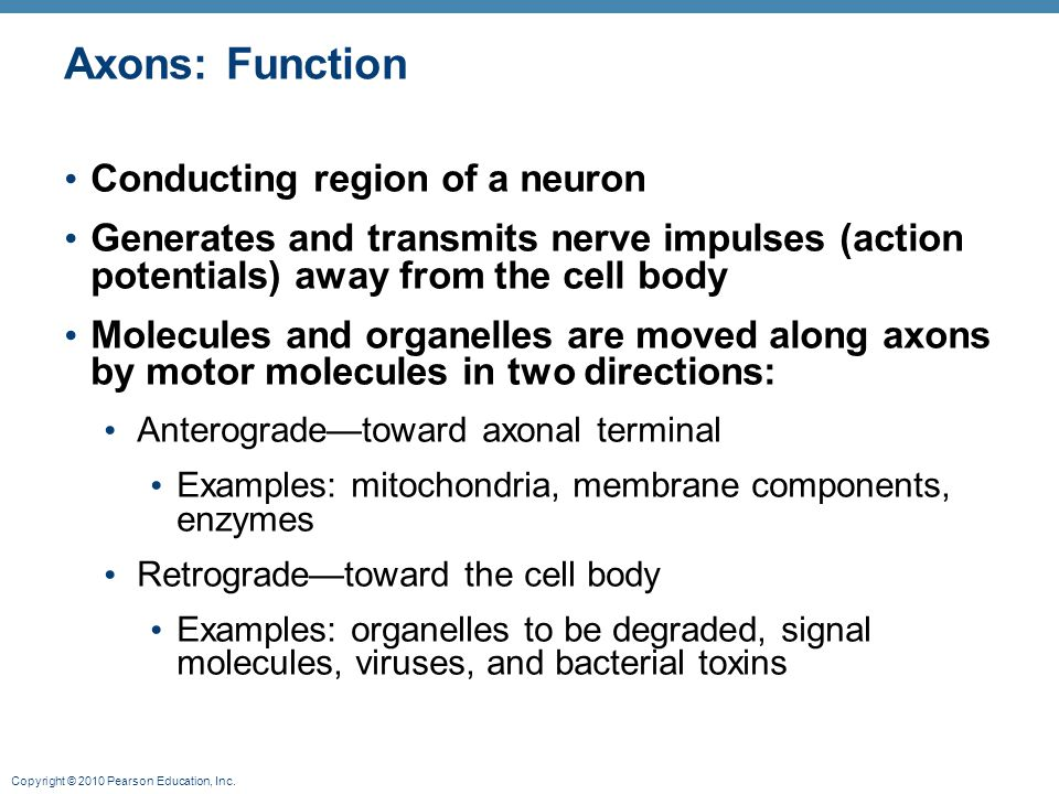 Axons: Function Conducting region of a neuron