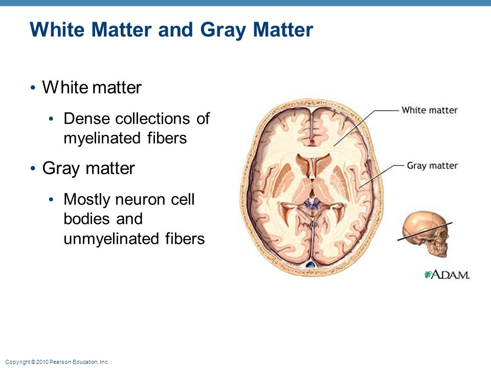White Matter and Gray Matter