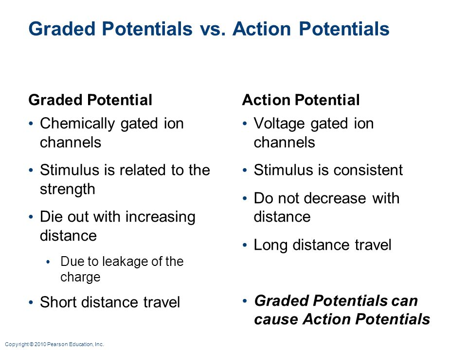 Graded Potentials vs. Action Potentials