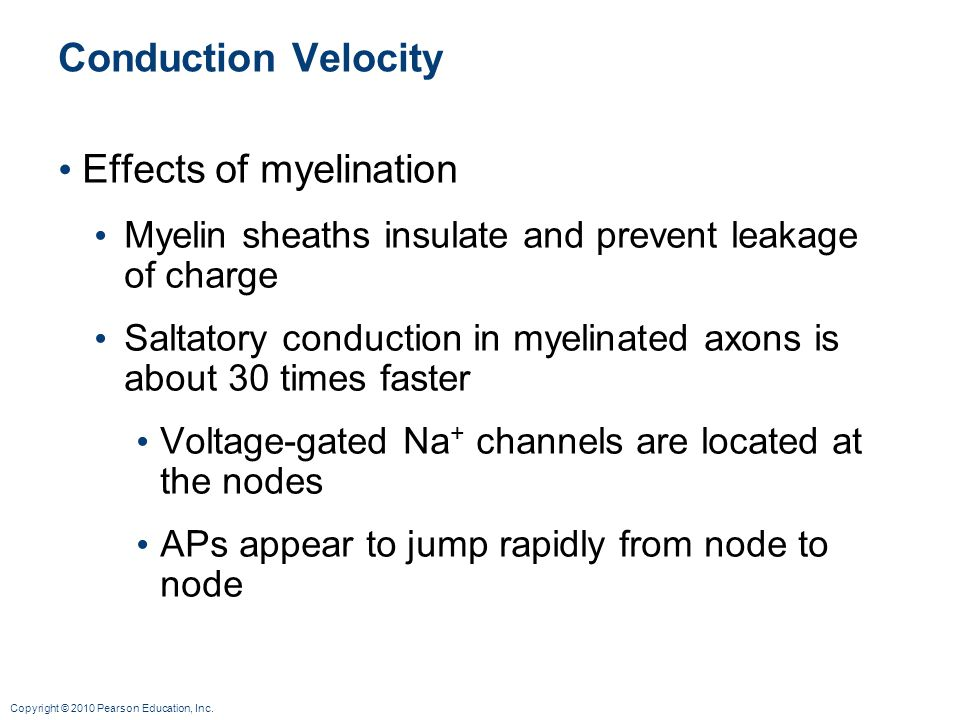 Effects of myelination