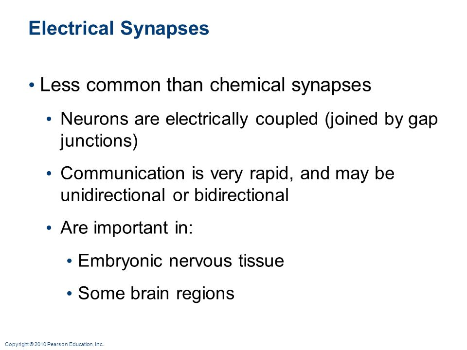 Less common than chemical synapses