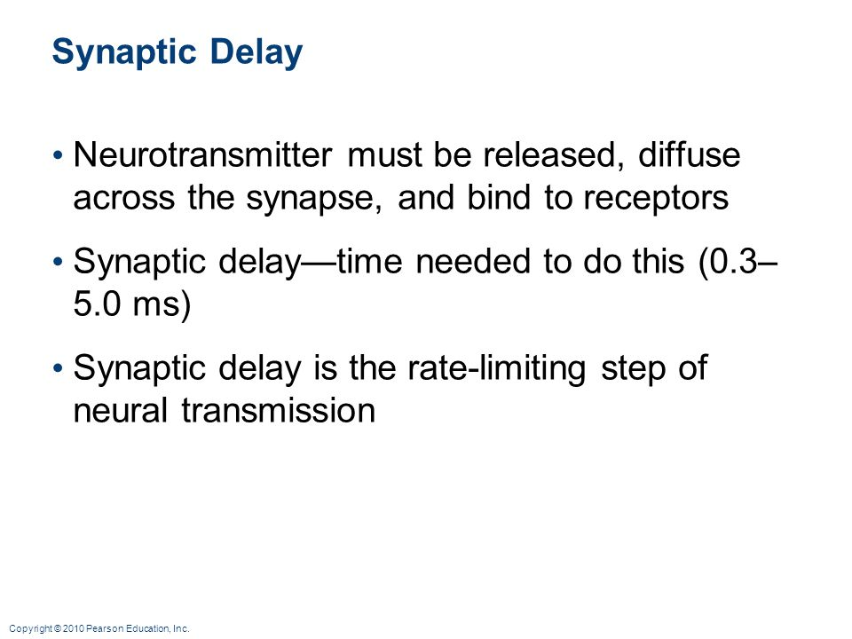 Synaptic Delay Neurotransmitter must be released, diffuse across the synapse, and bind to receptors.