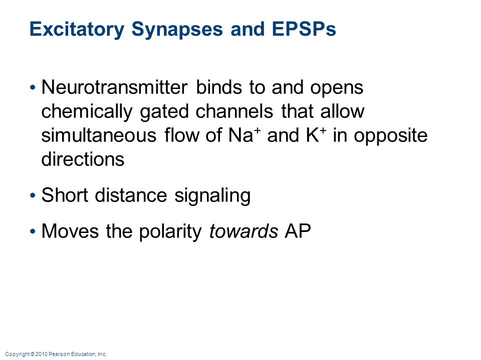 Excitatory Synapses and EPSPs