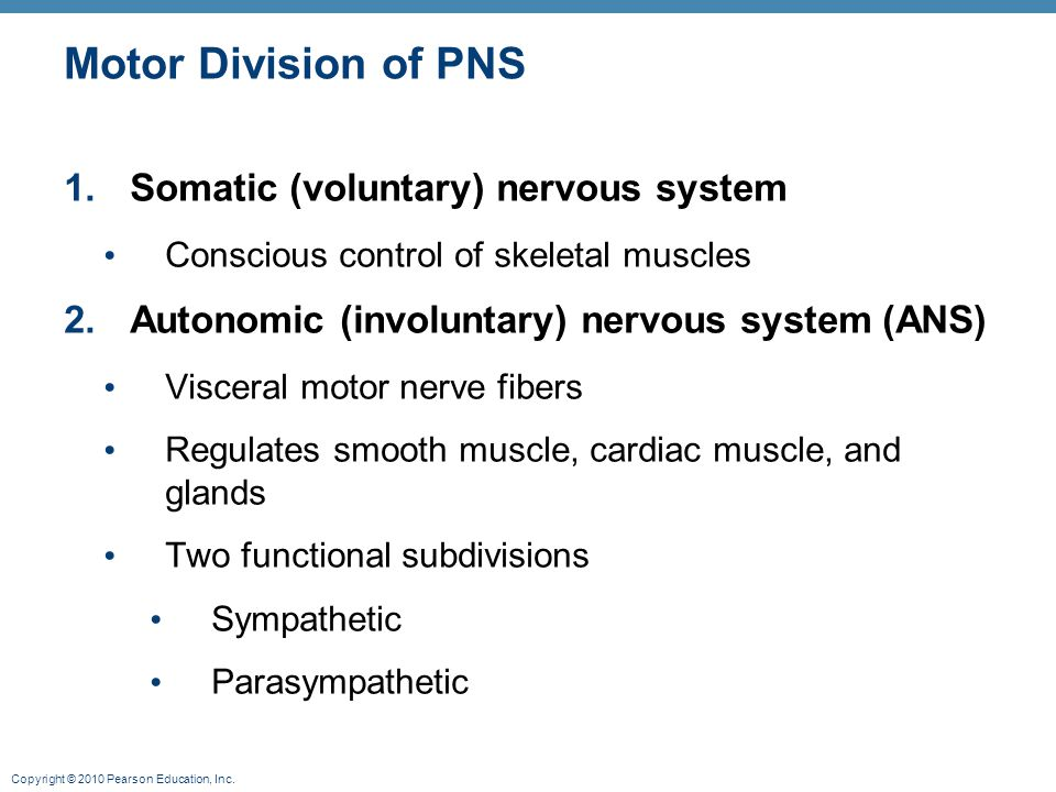 Motor Division of PNS Somatic (voluntary) nervous system