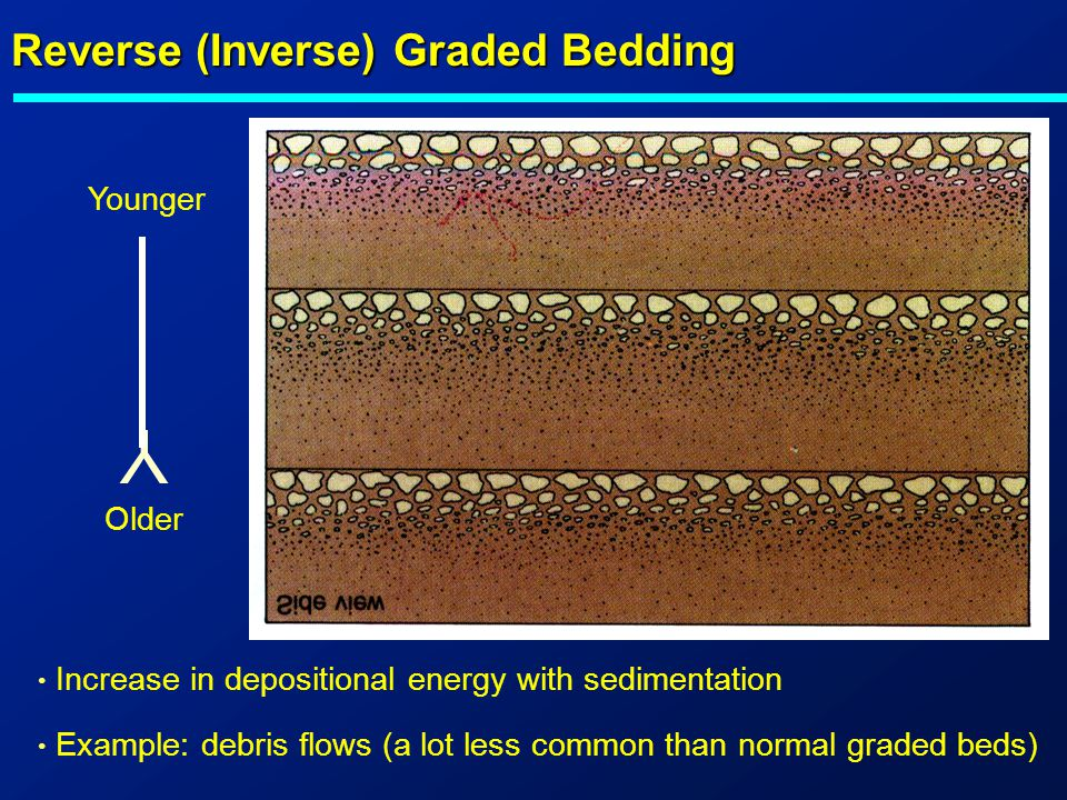 Y Reverse (Inverse) Graded Bedding Younger Older