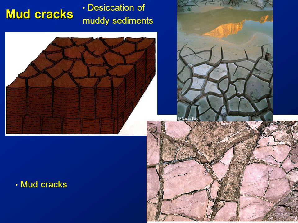 Mud cracks Desiccation of muddy sediments Mud cracks 5 cm