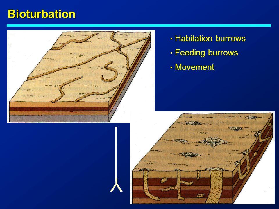 Bioturbation Habitation burrows Feeding burrows Movement Y