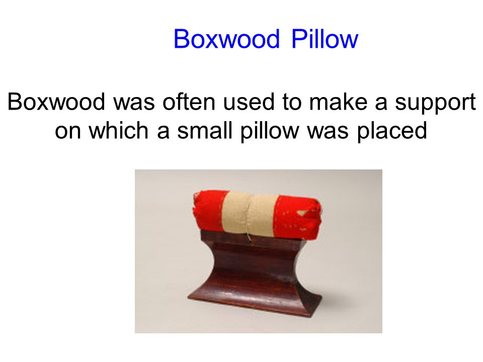 Boxwood Pillow Boxwood was often used to make a support on which a small pillow was placed