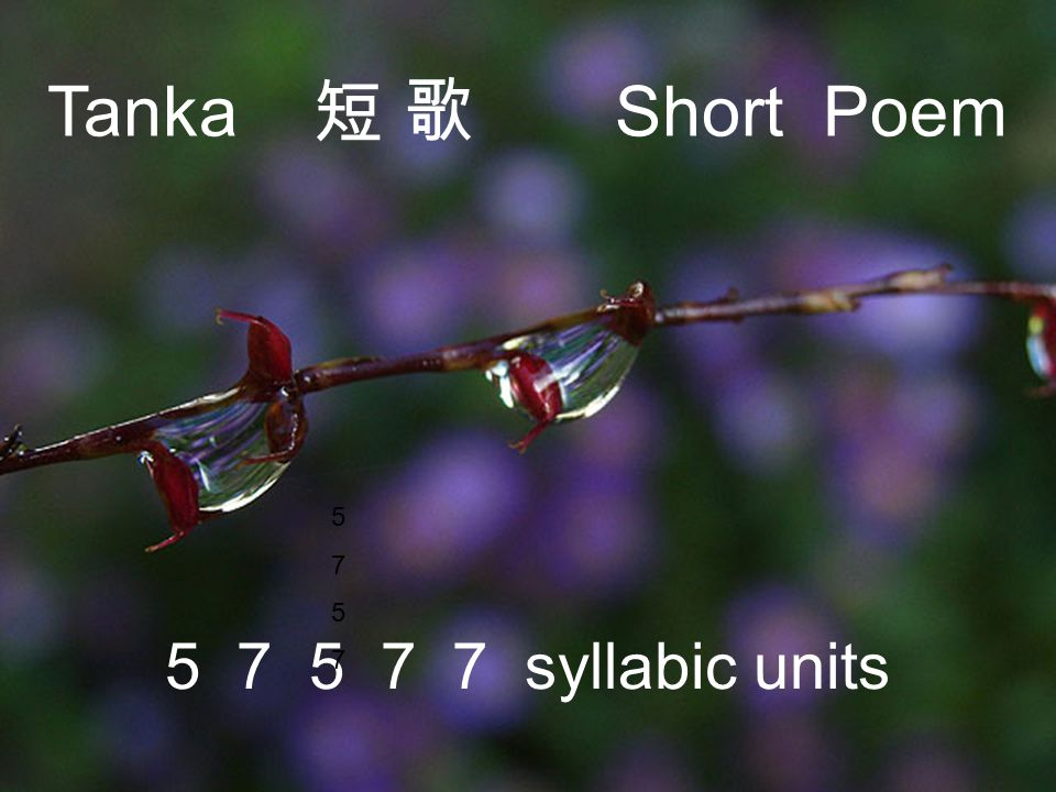 Tanka 短 歌 Short Poem 5 7 5 7 5 7 7 syllabic units