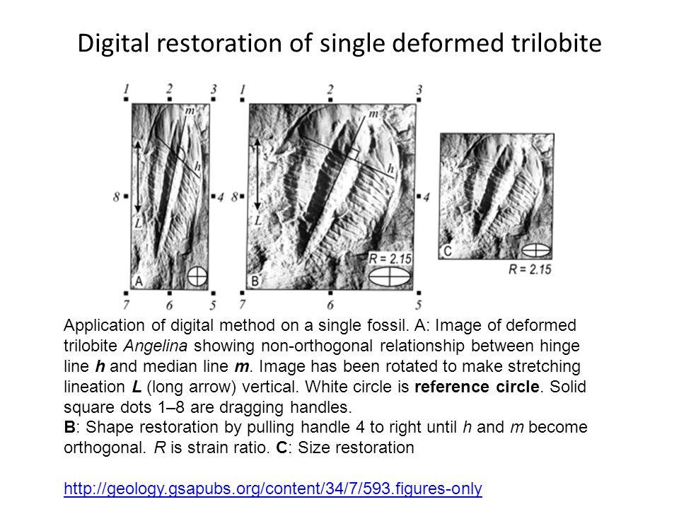 Digital restoration of single deformed trilobite