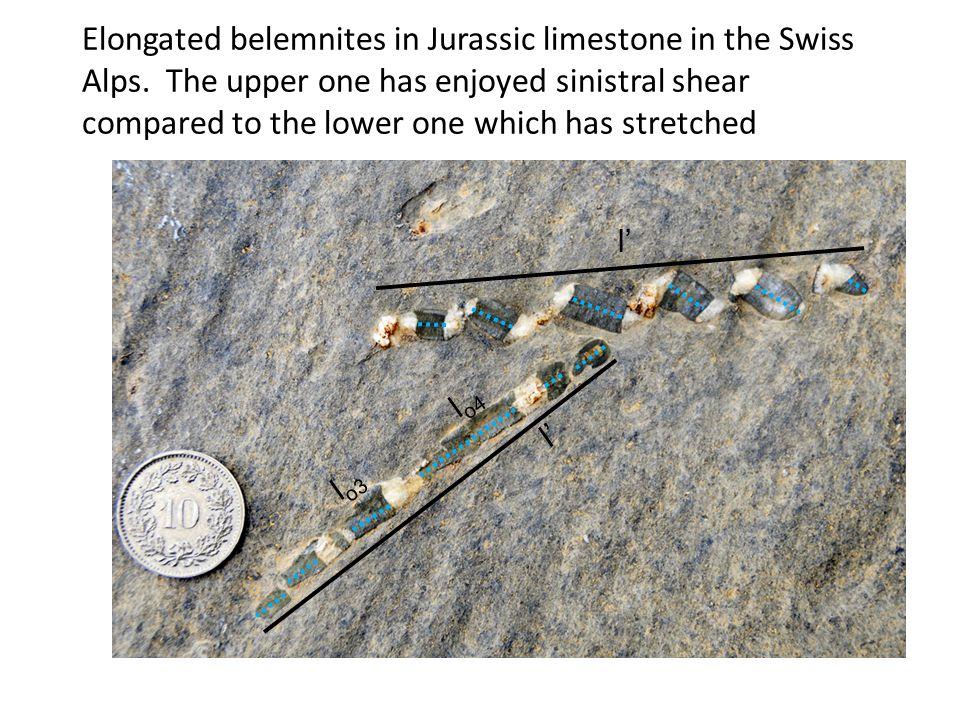 Elongated belemnites in Jurassic limestone in the Swiss Alps