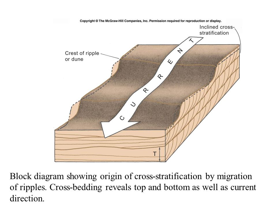 Block diagram showing origin of cross-stratification by migration of ripples.