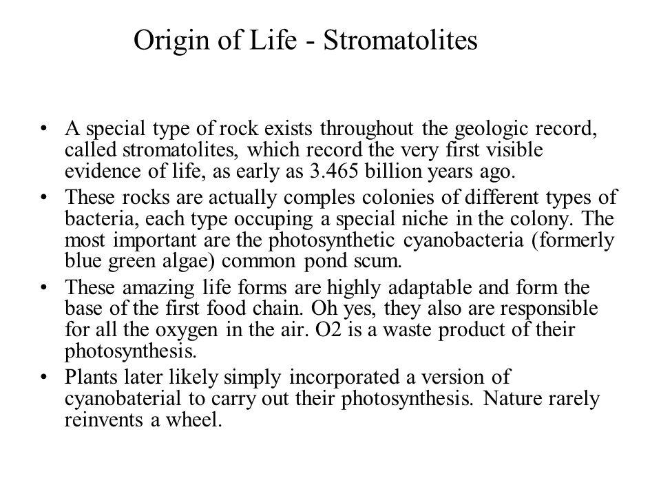 Origin of Life - Stromatolites
