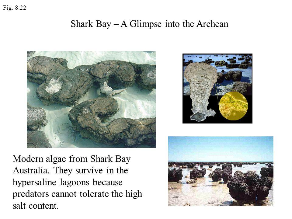 Shark Bay – A Glimpse into the Archean
