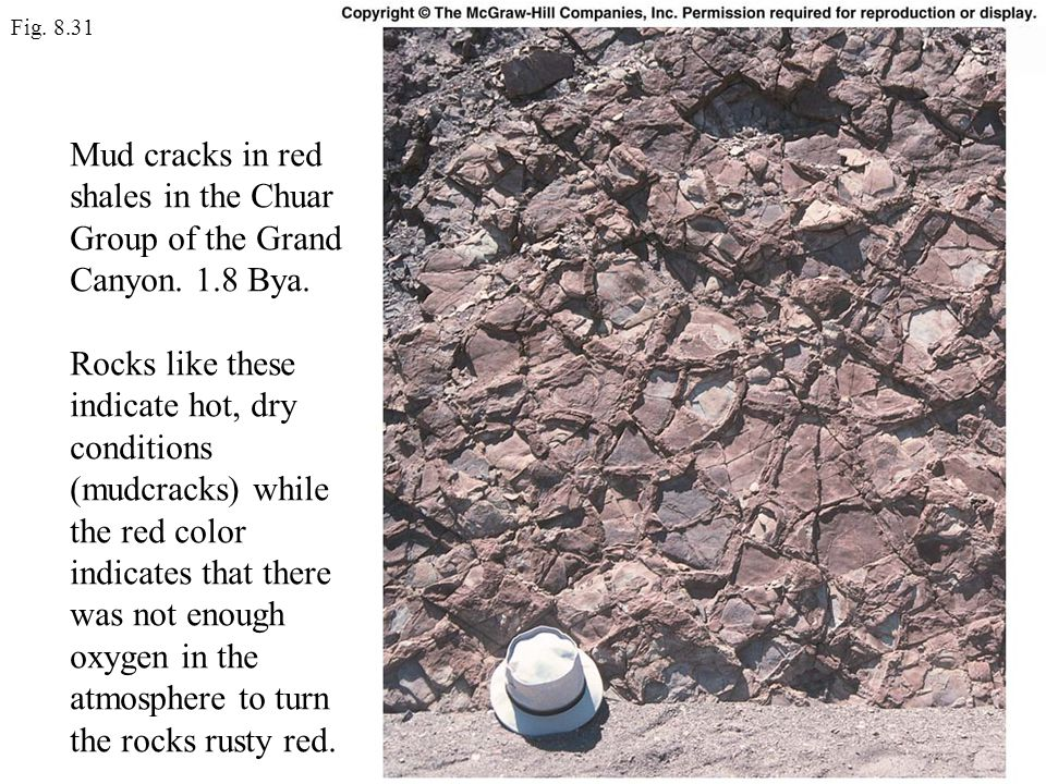 Fig. 8.31 Mud cracks in red shales in the Chuar Group of the Grand Canyon. 1.8 Bya.