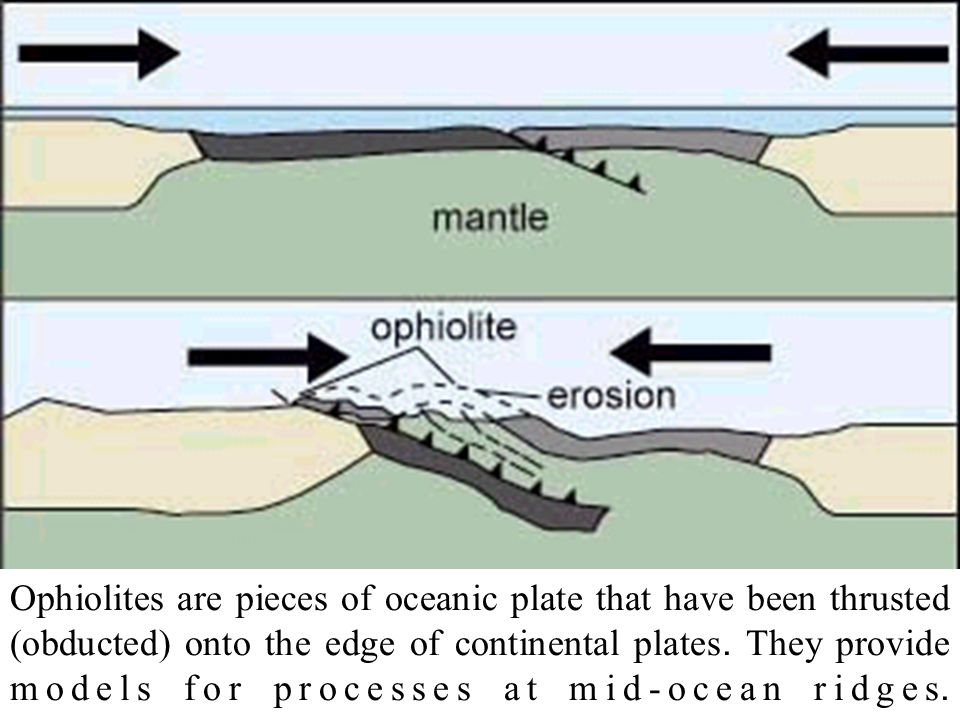 Ophiolites are pieces of oceanic plate that have been thrusted (obducted) onto the edge of continental plates.