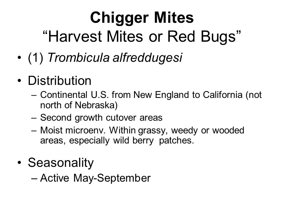 Chigger Mites Harvest Mites or Red Bugs
