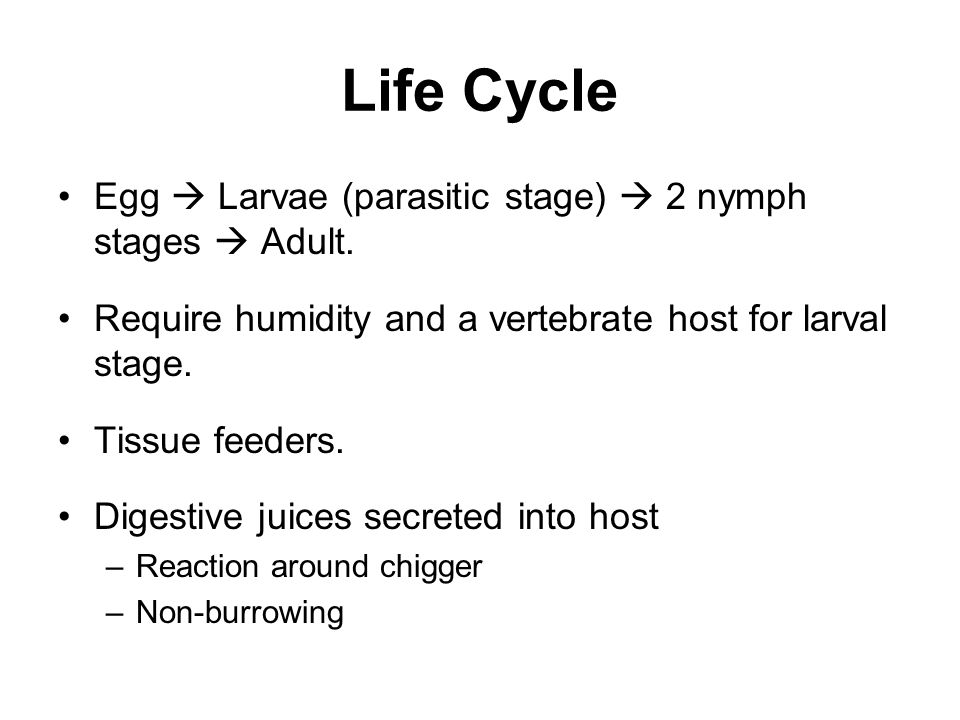 Life Cycle Egg  Larvae (parasitic stage)  2 nymph stages  Adult.