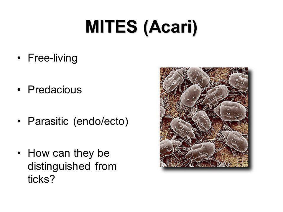 MITES (Acari) Free-living Predacious Parasitic (endo/ecto)