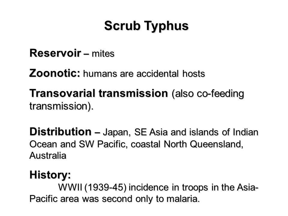 Scrub Typhus Reservoir – mites Zoonotic: humans are accidental hosts