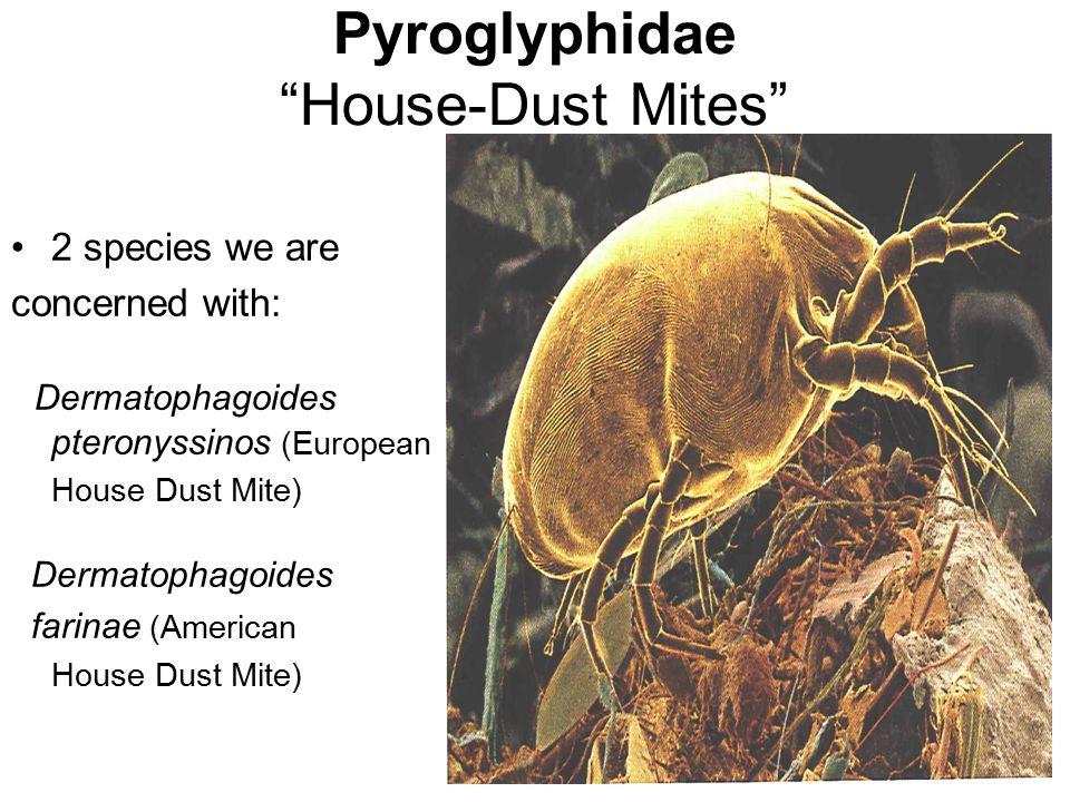 Pyroglyphidae House-Dust Mites