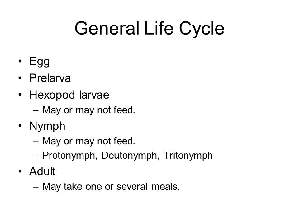 General Life Cycle Egg Prelarva Hexopod larvae Nymph Adult