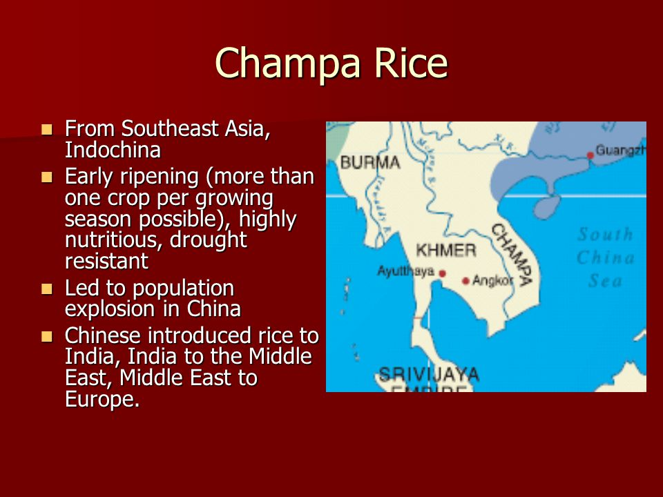 Champa Rice From Southeast Asia, Indochina