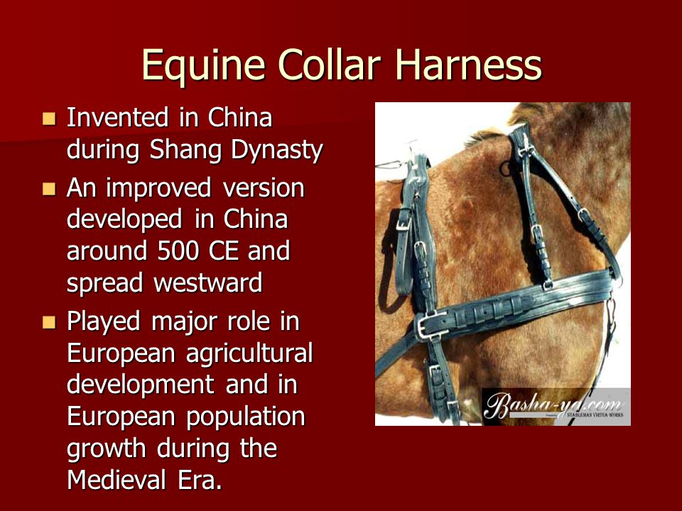 Equine Collar Harness Invented in China during Shang Dynasty