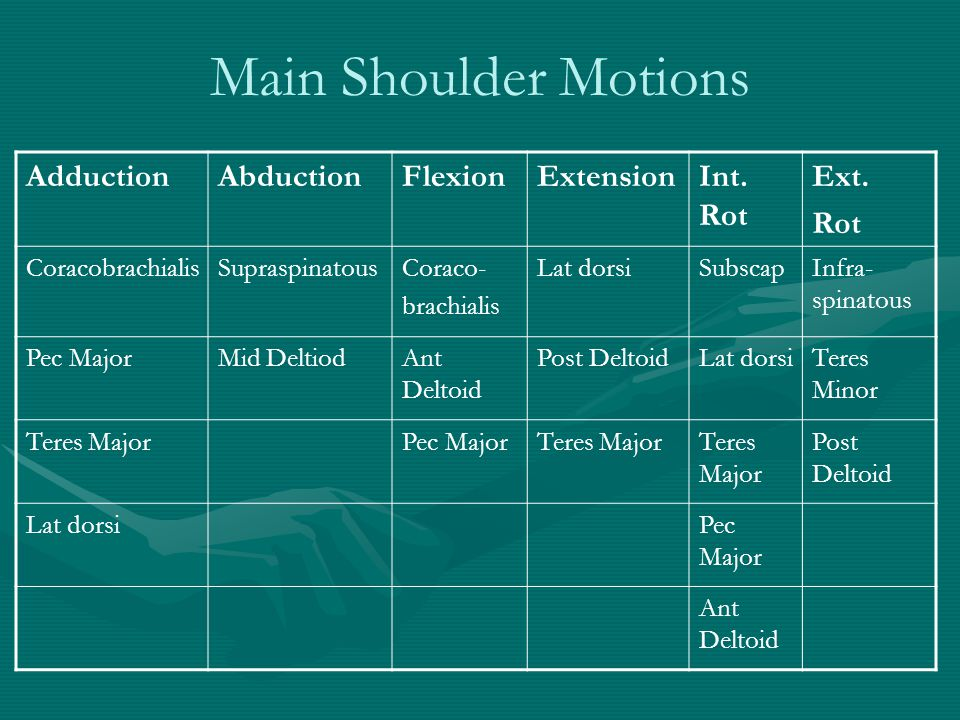 Main Shoulder Motions Adduction Abduction Flexion Extension Int. Rot