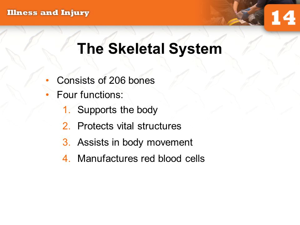 The Skeletal System Consists of 206 bones Four functions: