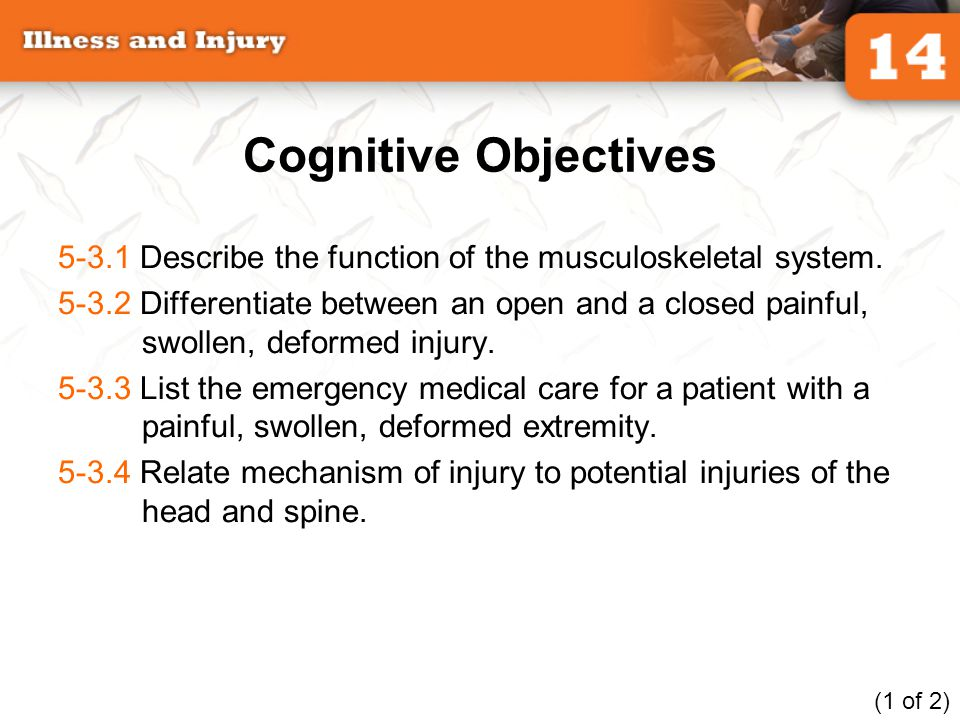 Cognitive Objectives 5-3.1 Describe the function of the musculoskeletal system.