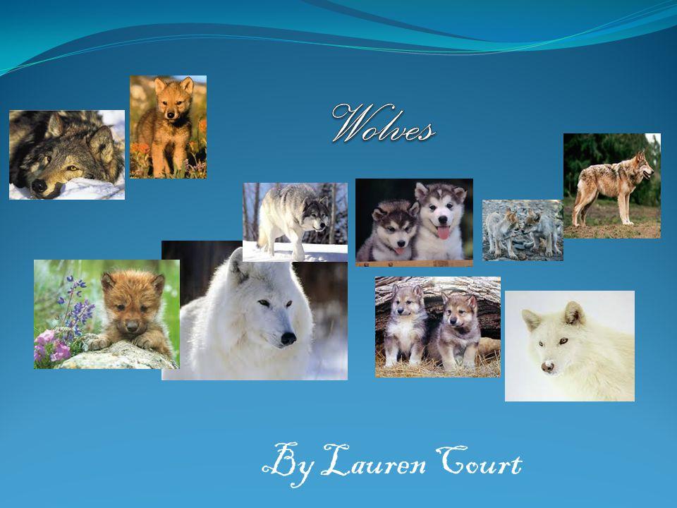 Wolves By Lauren Court