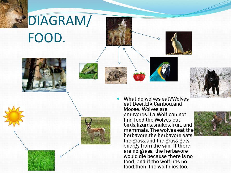 DIAGRAM/ FOOD.
