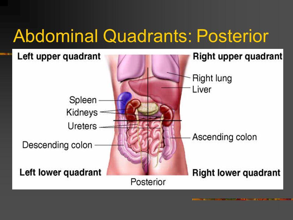 Abdominal Quadrants: Posterior