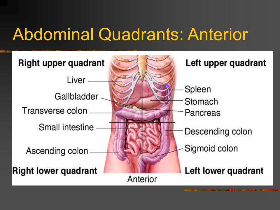 Abdominal Quadrants: Anterior