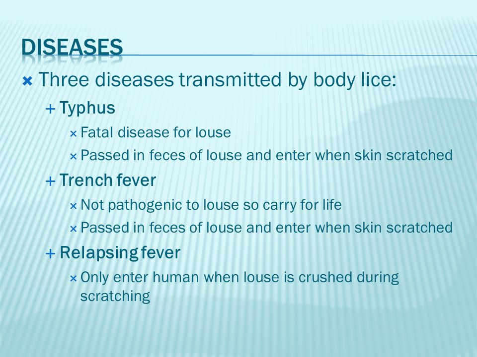 Diseases Three diseases transmitted by body lice: Typhus Trench fever