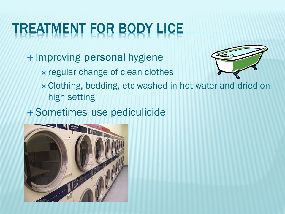 Treatment for body lice