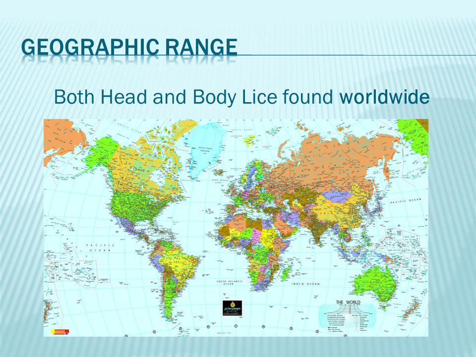 Both Head and Body Lice found worldwide