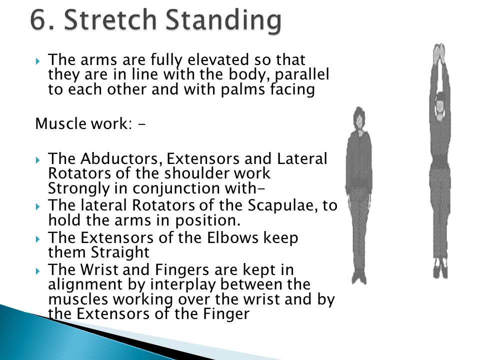 6. Stretch Standing The arms are fully elevated so that they are in line with the body, parallel to each other and with palms facing.