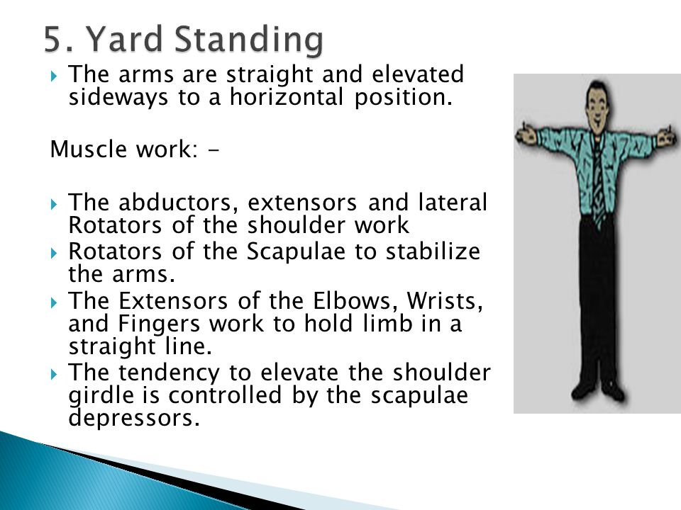 5. Yard Standing The arms are straight and elevated sideways to a horizontal position. Muscle work: -