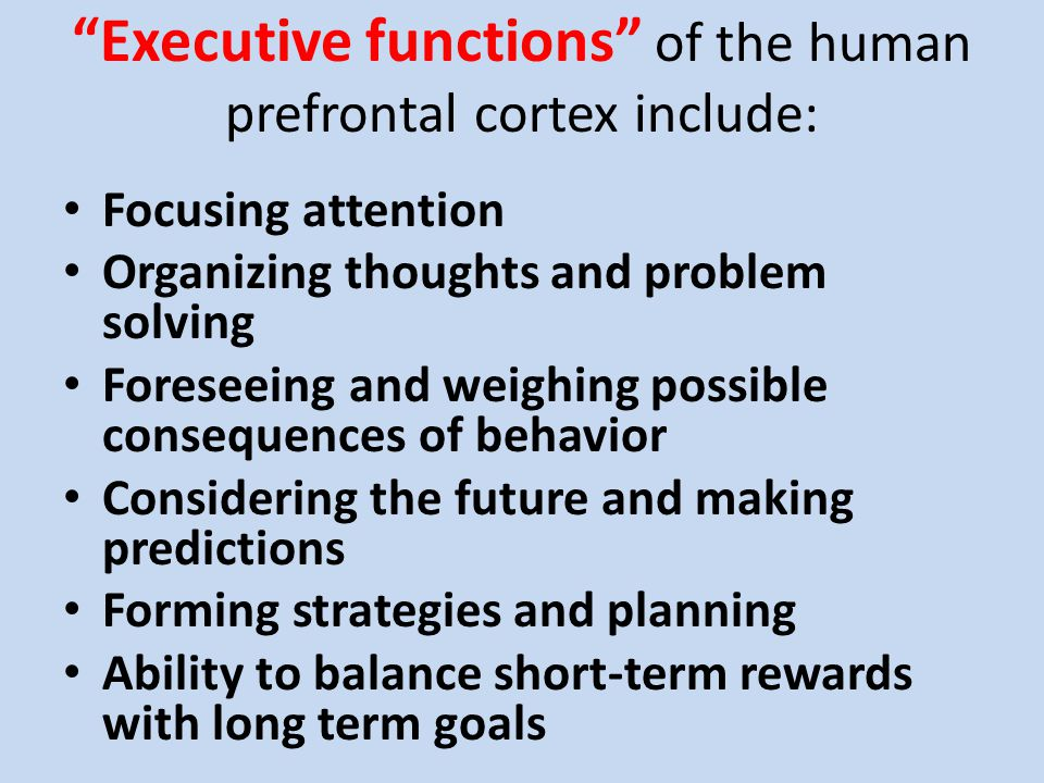 Executive functions of the human prefrontal cortex include: