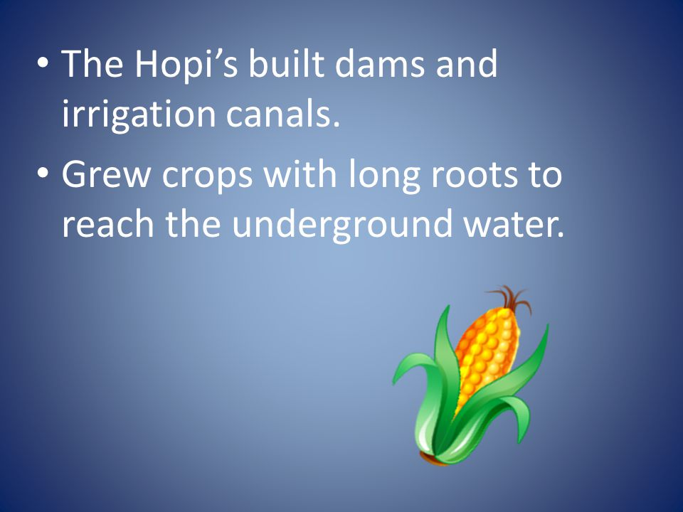 The Hopi's built dams and irrigation canals.