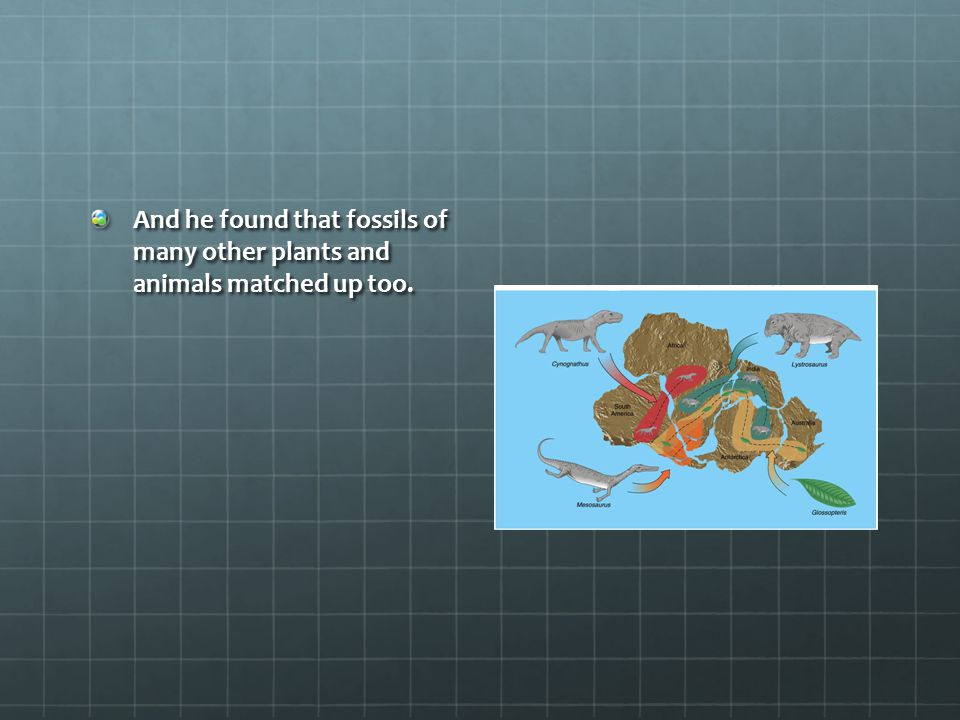 And he found that fossils of many other plants and animals matched up too.