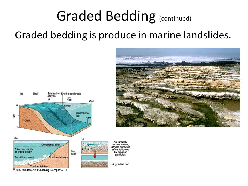 Graded Bedding (continued)