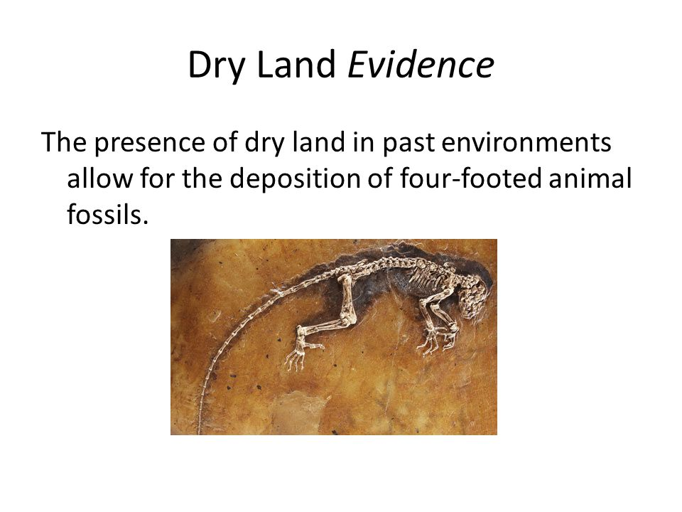Dry Land Evidence The presence of dry land in past environments allow for the deposition of four-footed animal fossils.
