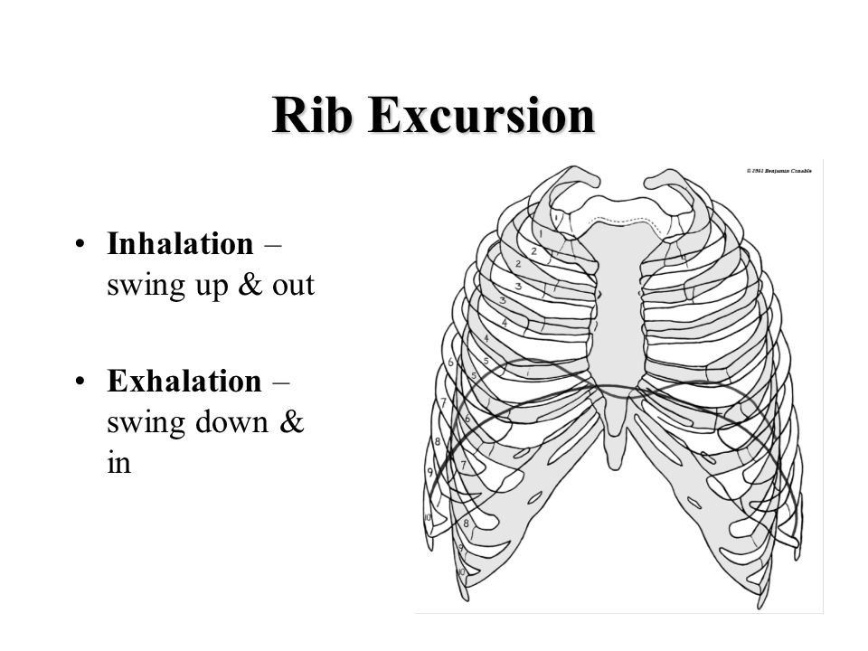 Rib Excursion Inhalation – swing up & out Exhalation – swing down & in