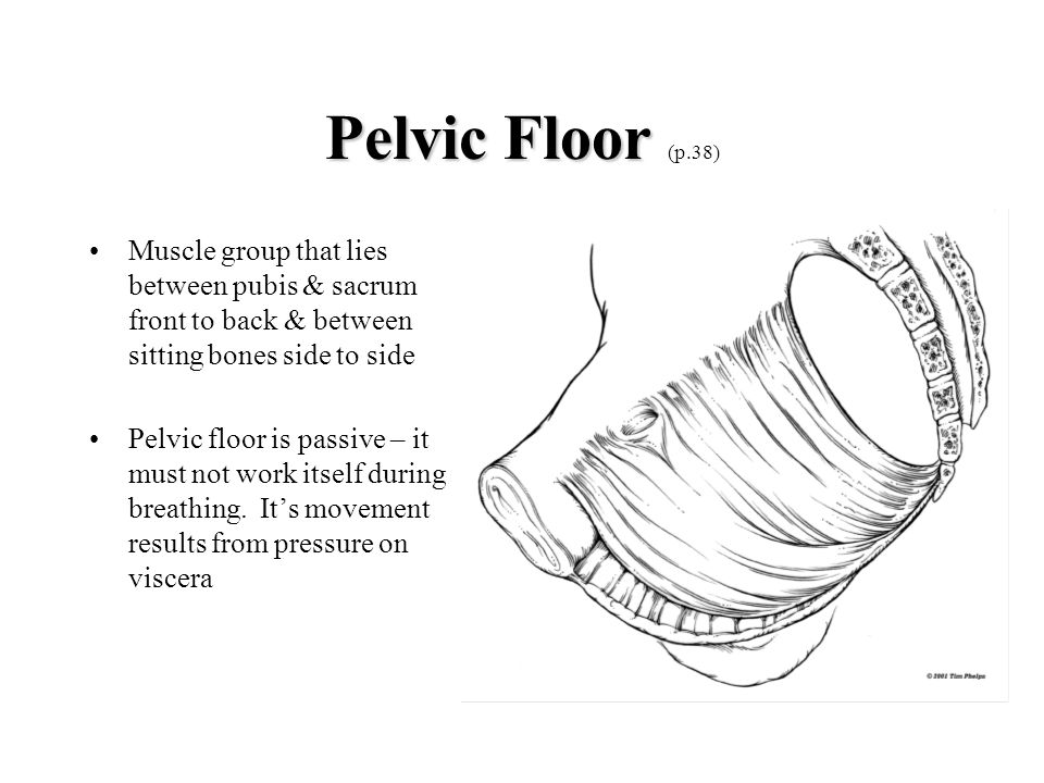 Pelvic Floor (p.38) Muscle group that lies between pubis & sacrum front to back & between sitting bones side to side.